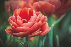 Пламенный цветок