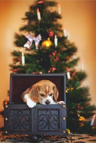 Рождественский щенок